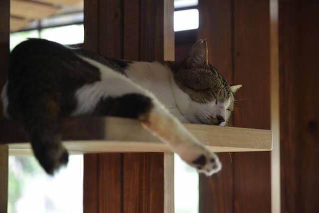 気持ち良さそうに眠る猫カフェ「Cafe Gatto」の猫