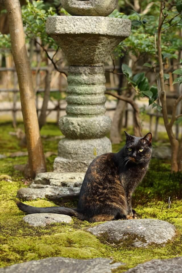 フォトブック「京のにゃんこ」に登場する、庭園の猫