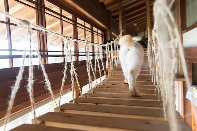 猫カフェ「Cafe Gatto」には吊り橋式のキャットウォークが