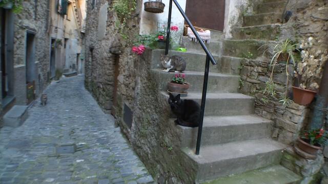 アニマルプラネット、世界ねこ散歩~イタリア~の放送シーン2