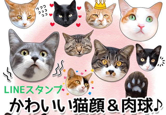 38種類の猫を収録、LINEスタンプ「かわいい猫顔&肉球♪」が登場