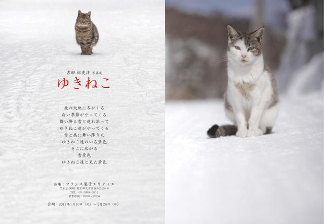 雪と猫がテーマ・吉田裕吏洋氏の写真展、文京区の洋菓子店エリティエで開催
