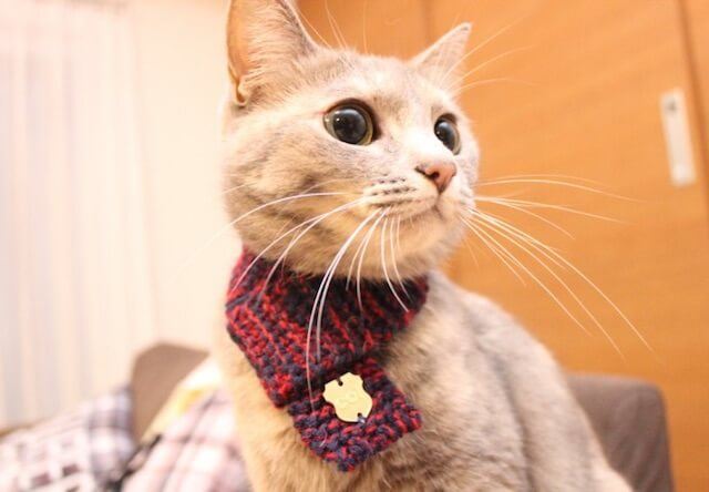 「ネコマフラー(necomuffler)」を身につける猫