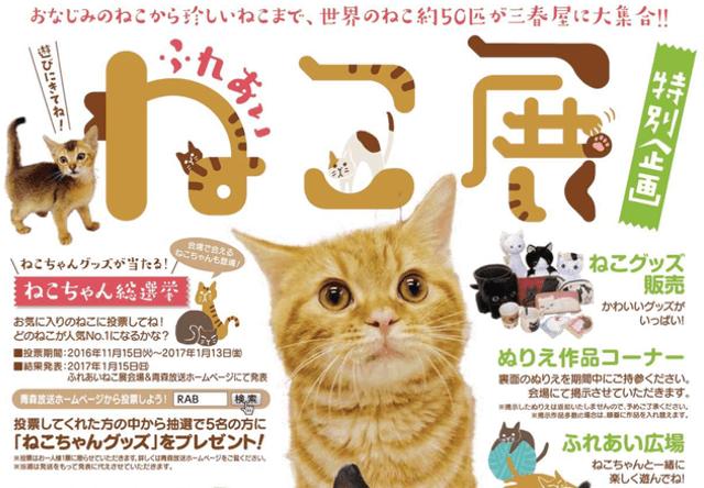 世界中の珍しい猫と触れ合える「ふれあい ねこ展」が青森で開催
