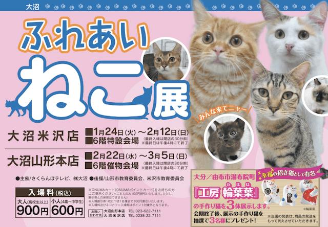 世界中の珍しい猫と触れ合える「ふれあい ねこ展」が山形で開催