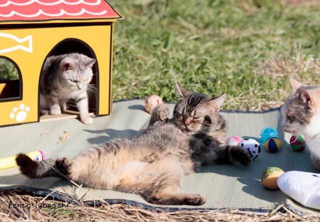 映画「ねこあつめの家」の猫写真集が発売!撮影は五十嵐健太氏