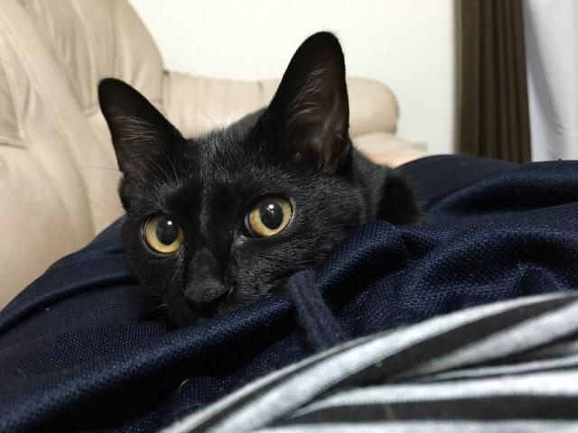 猫のサンプル写真