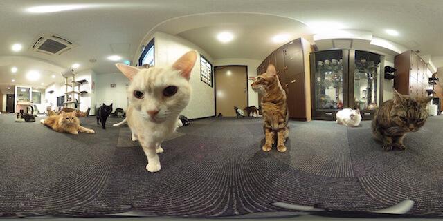 360°カメラで猫カフェの店内を撮影した写真