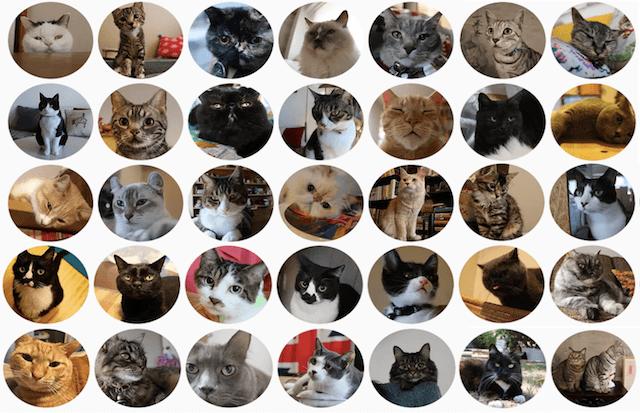 「猫のいる暮らし展」で公開される、総勢35匹のネコのドキュメンタリー映像や写真