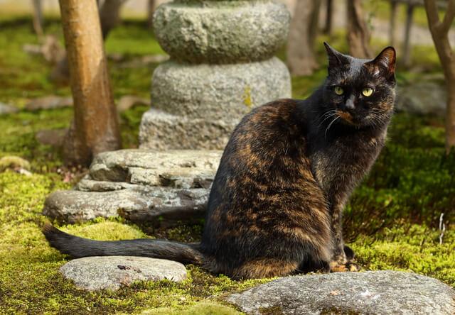 京都の看板猫や街猫に癒やされるフォトブック「京のにゃんこ」