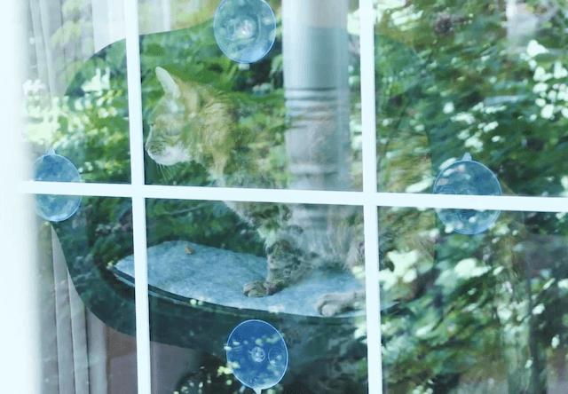 窓の外から見た、EZ マウント ウィンドウ