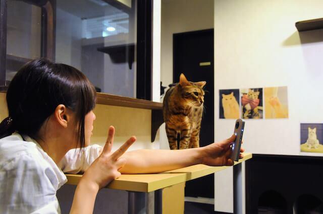 360°カメラで猫と一緒に写真撮影