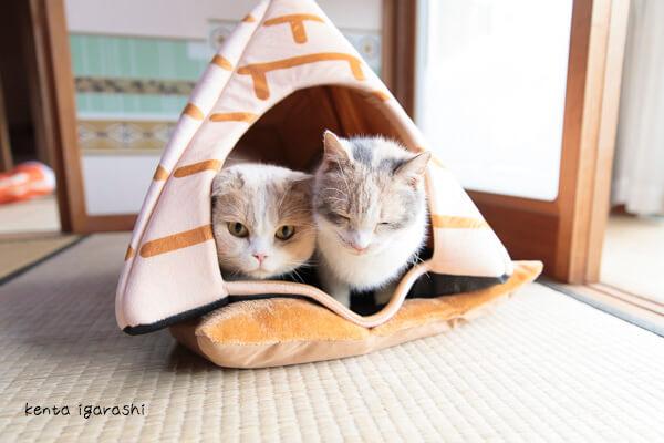 写真集「もふあつめ」の猫写真イメージ1