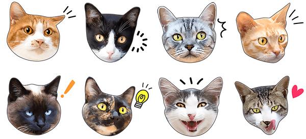 猫のLINEスタンプ「かわいい猫顔&肉球♪」のイメージ3
