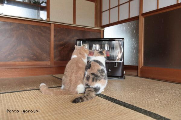 写真集「もふあつめ」の猫写真イメージ2