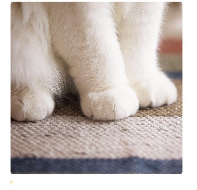 写真集「ねこのおてて」に収録されている猫の手1