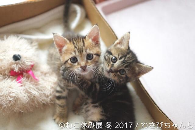 わさびちゃんちの新作猫写真