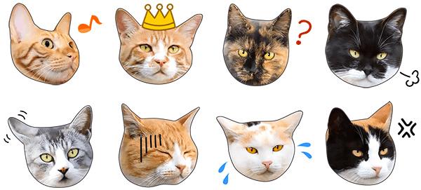 猫のLINEスタンプ「かわいい猫顔&肉球♪」のイメージ4