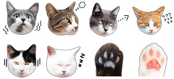猫のLINEスタンプ「かわいい猫顔&肉球♪」のイメージ5
