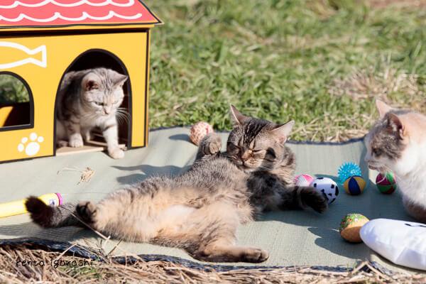 ゲームねこあつめに登場する猫ハウスの実物も