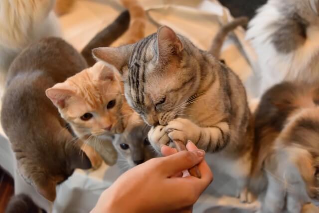 猫カフェのイメージ画像