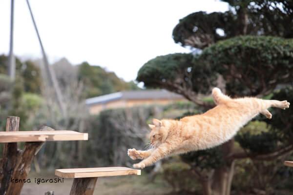 写真集「もふあつめ」に登場する、五十嵐健太さんが撮影したジャンプ猫
