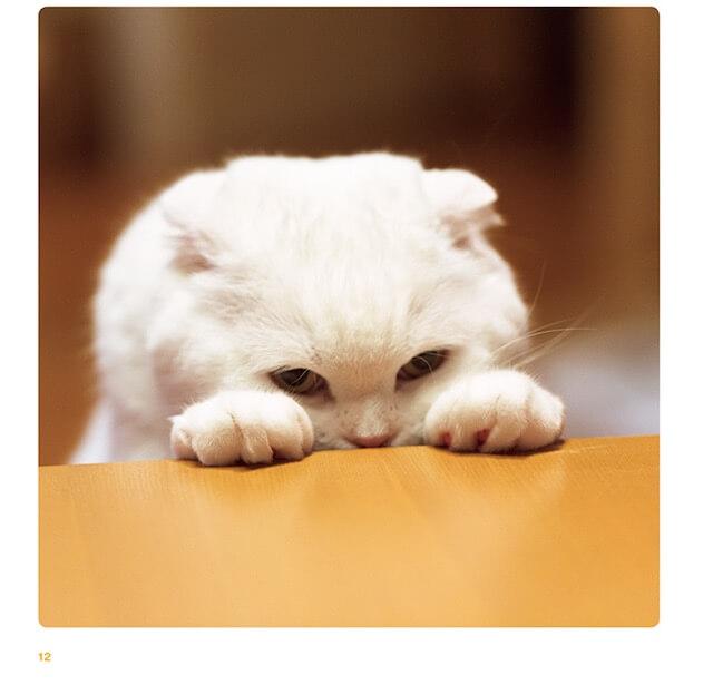 写真集「ねこのおてて」に収録されている猫の手5