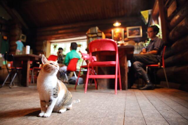 フォトブック「京のにゃんこ」に登場する、カフェの猫