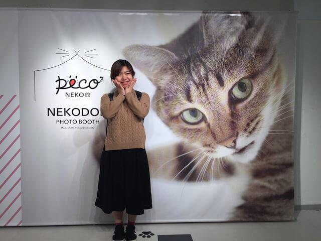 人気ネコ「Kiki」くんの壁ドンパネル