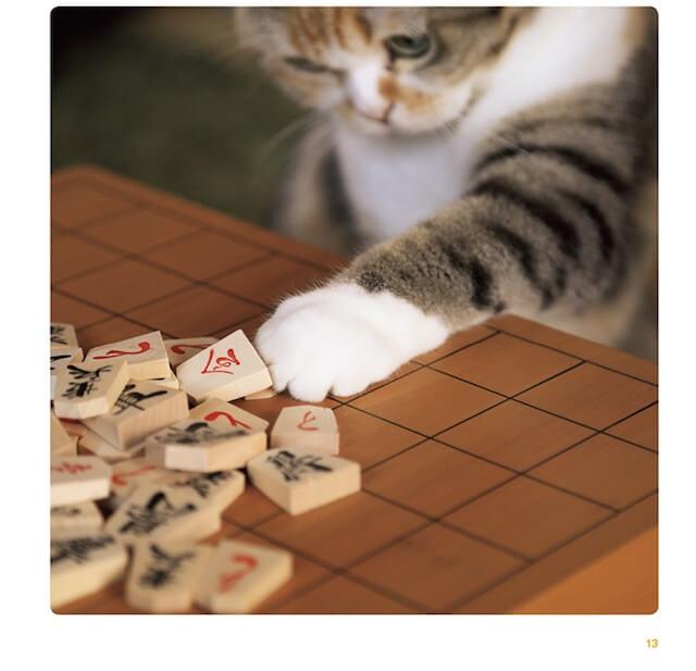 写真集「ねこのおてて」に収録されている猫の手6
