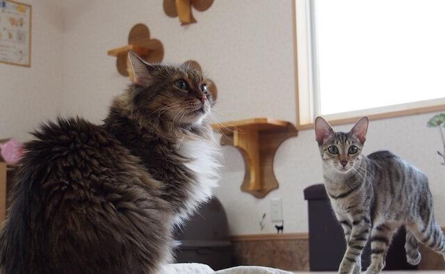 つくばわんわんランドの「ねこハウス」にいる猫の写真