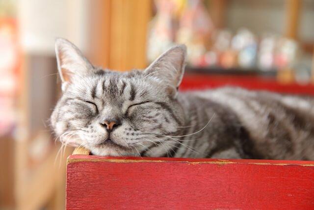 フォトブック「京のにゃんこ」に登場する、寝ている猫