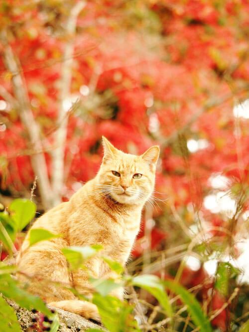 猫写真家・中山祥代さんの写真作品「京都のねこ」