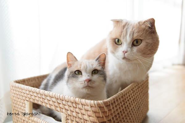 映画「ねこあつめの家」に出演する猫たちの写真集、「もふあつめ」のネコ写真