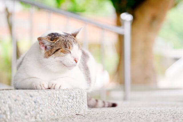 気持ち良さそうに眠る台湾の猫