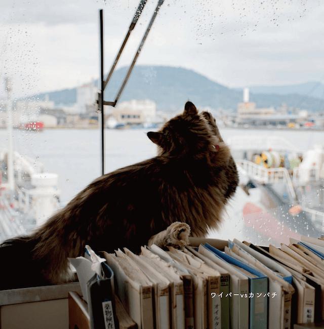 船室から外を眺めるカンパチ船長