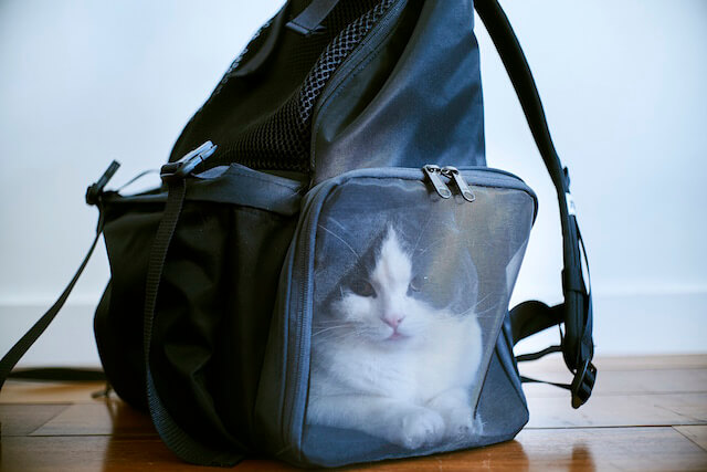 小谷実由とミツカルストアが開発した猫とお出かけできる「バックキャットパック」の写真3