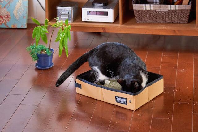 携帯用の猫トイレ「サンドボックス」の使用イメージ