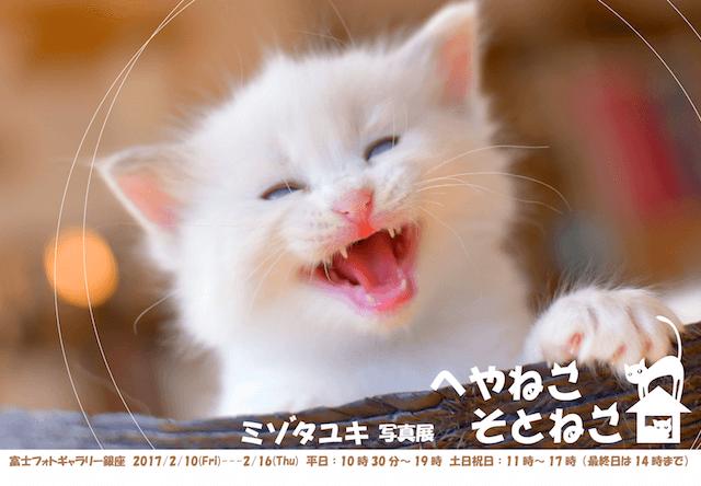 ミゾタユキ写真展「へやねこ そとねこ」が2/10から銀座で開催