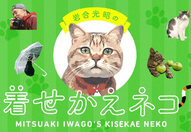岩合光昭さんの猫写真に癒やされるLINE着せかえが登場