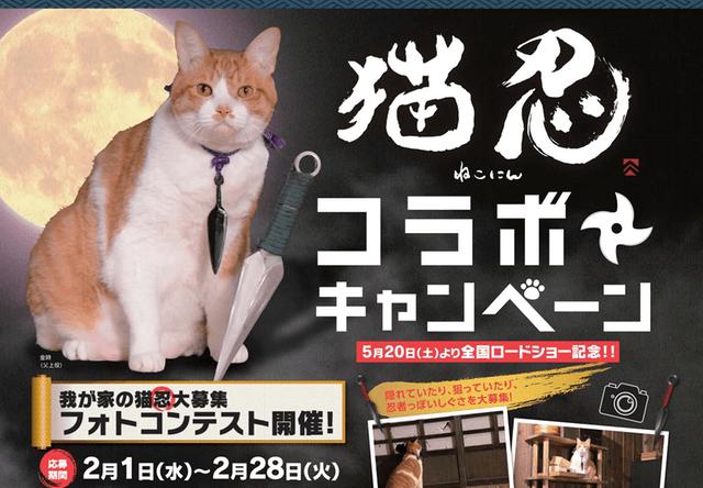 愛猫が映画出演のチャンス!猫忍がフォトコンテストを開催中