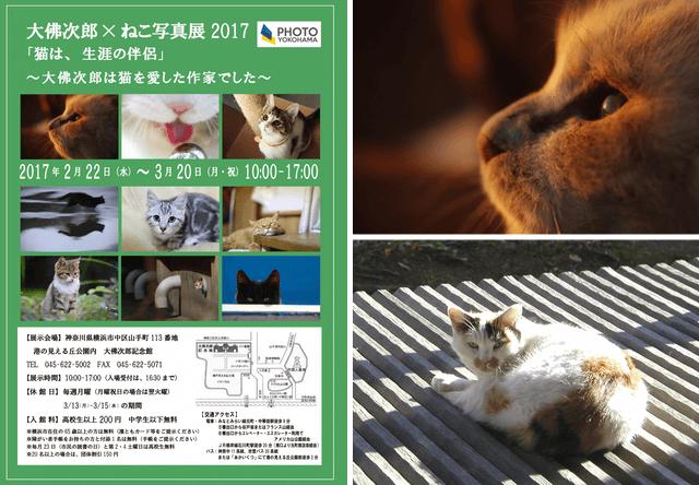 横浜の大佛次郎記念館で2/22から「ねこ写真展2017」が開催