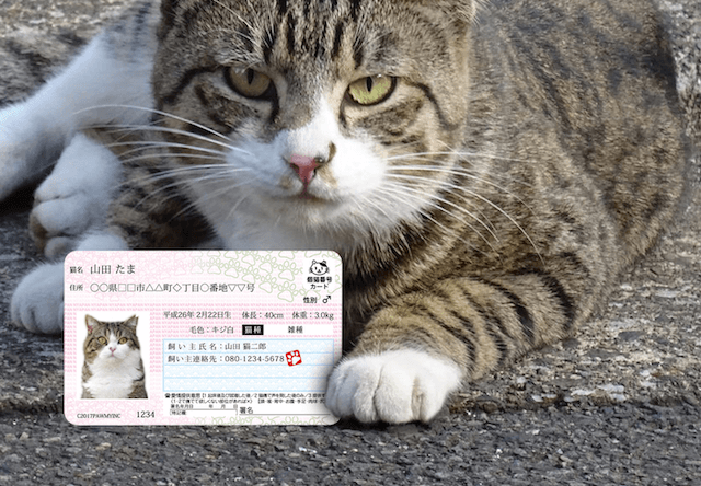 愛猫用のIDカード「マイニャンバーカード」が2月22日に発売