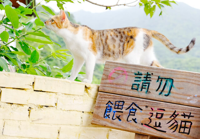 フォトグラファー・ミゾタユキ氏と行く、2泊3日のネコ撮影ツアー in 台湾