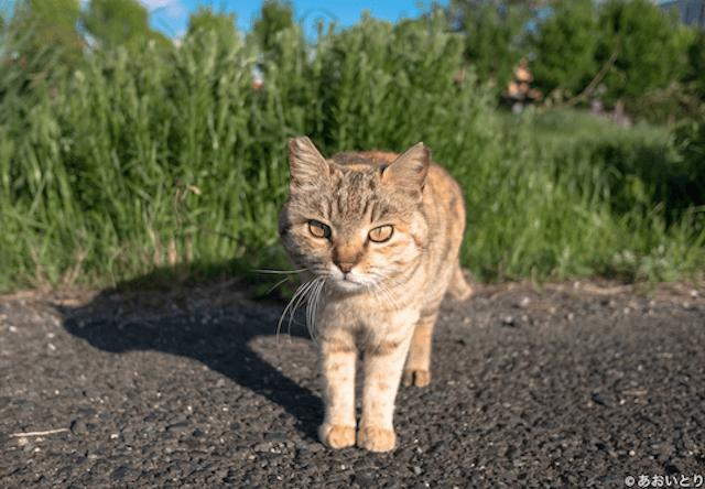 岩手県に猫ノ図書館がオープン!あおいとり氏のパネル展も