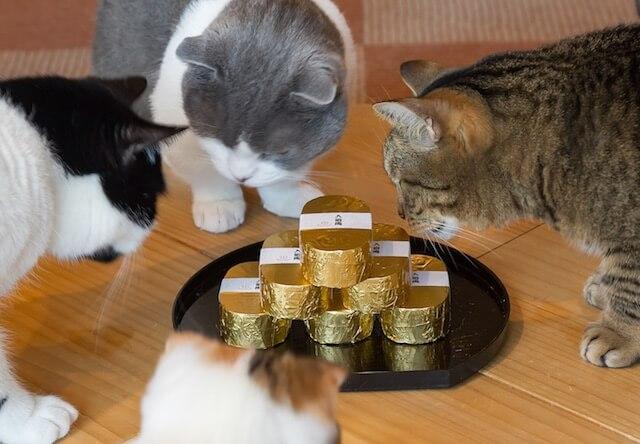 埼玉県大宮の猫カフェ猫家で「グリーンにゃんぼ!宝くじ」が開催