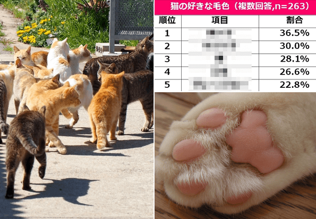 猫の好きな毛色(柄・模様)、パーツランキング2017