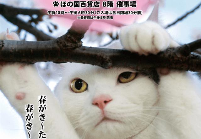 岩合光昭 写真展「ねこ歩き」3/2から豊橋市 ほの国百貨店で開催