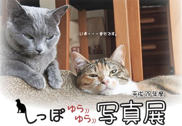 アニパル仙台で譲渡猫の写真展&適正飼育セミナーが開催