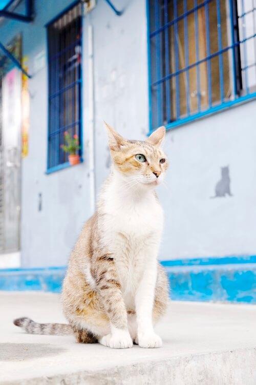 台湾の猫撮影ツアー、台湾ネコの写真